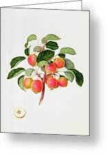 The Tartarian Crab Apple Greeting Card