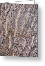 The Texture Of Wood Greeting Card