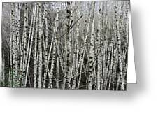 The Thicket Greeting Card