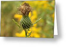 The Thistle Greeting Card