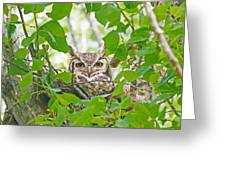 The Thoughtful Owl Greeting Card