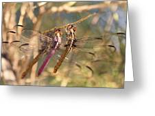 The Three Dragonflies  Greeting Card