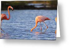 The Three Flamingos Greeting Card