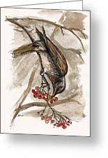 The Thrush Eating Cranberries Greeting Card