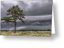 The Thunder Rolls - Storm - Pine Tree Greeting Card by Jason Politte
