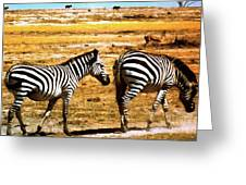 The Tired Zebras Greeting Card