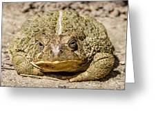 The Toad Greeting Card
