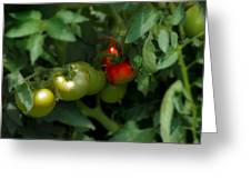 The Tomato Plant Greeting Card