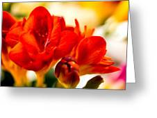 The Touch Of Red Greeting Card