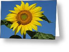 The Touch Of Sun Greeting Card