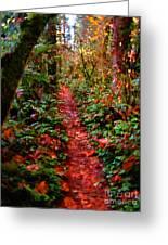 The Trail At Rainbow Falls Washington Greeting Card