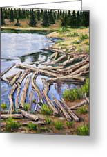 The Trail Series - Beaver Pond Greeting Card