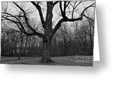 The Tree In The Park Greeting Card