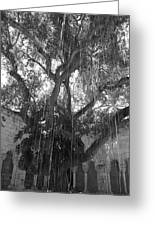 The Tree Vines Greeting Card