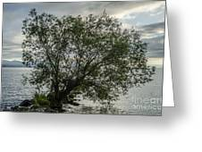 The Tree With His Feet In Water Greeting Card