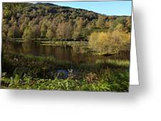 The Trees By The Loch Greeting Card