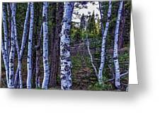 The Trees Have Eyes-d Greeting Card