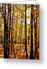 The Trees Through The Forest Greeting Card