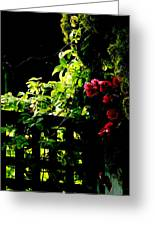 The Trellis  Greeting Card