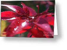 The Trickling Droplets After The Rain Greeting Card