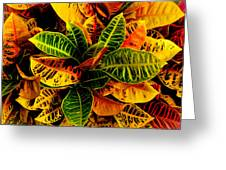 The Tropical Croton Greeting Card