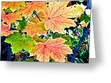 The Turning Leaves Greeting Card