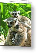 The Twins - Ring-tailed Lemurs Greeting Card