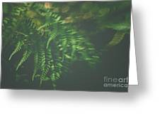 The Understory Greeting Card