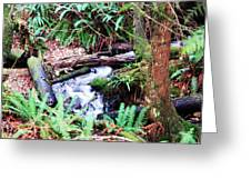 The Unknown Creek Greeting Card