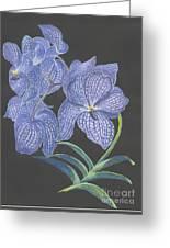 The Vanda Orchid Greeting Card