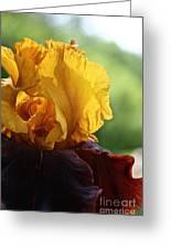 The Velvet Iris Greeting Card