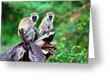 The Vervet Monkey. Lake Manyara. Tanzania. Africa Greeting Card