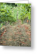 The Vines Greeting Card by Ariane Moshayedi