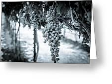 The Vineyard   Bw Greeting Card