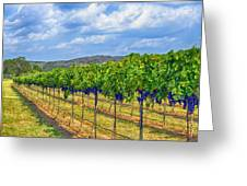 The Vineyard In Color Greeting Card