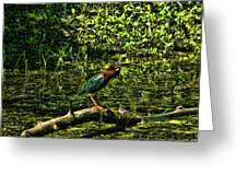 The Wader Greeting Card