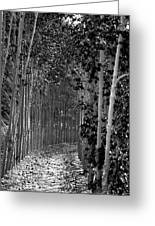 The Wall Of Trees II Greeting Card