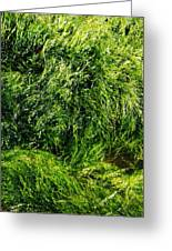 The Walls Are Alive - Seaside Abstract Greeting Card