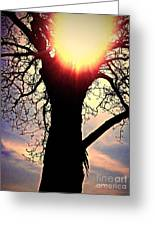 The Walnut Tree Greeting Card