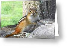 The Watching Chipmunk Reclines Greeting Card