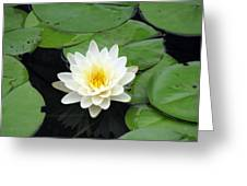 The Water Lilies Collection - 01 Greeting Card