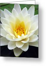 The Water Lilies Collection - 03 Greeting Card