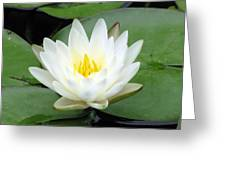 The Water Lilies Collection - 04 Greeting Card