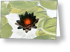 The Water Lilies Collection - Photopower 1034 Greeting Card