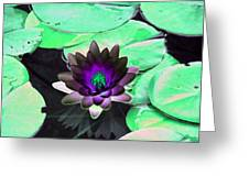The Water Lilies Collection - Photopower 1113 Greeting Card