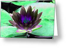 The Water Lilies Collection - Photopower 1116 Greeting Card