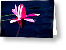 The Water Lily... Greeting Card