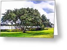 The Wedding Tree Greeting Card