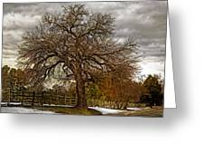 The Welcome Tree Greeting Card