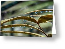 The Wet Of The Rain V2 Greeting Card